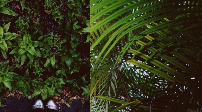 plantswl